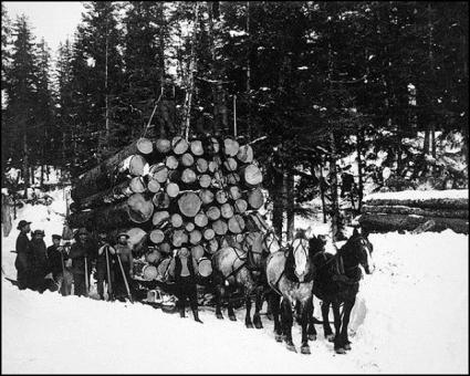 Logging in Forks