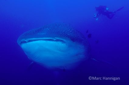 Marc Hannigan Underwater Photography