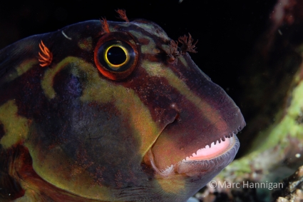Sequim Underwater Photography